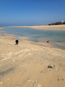 Dogs love this great expanse of sand and dunes, which is local to us.